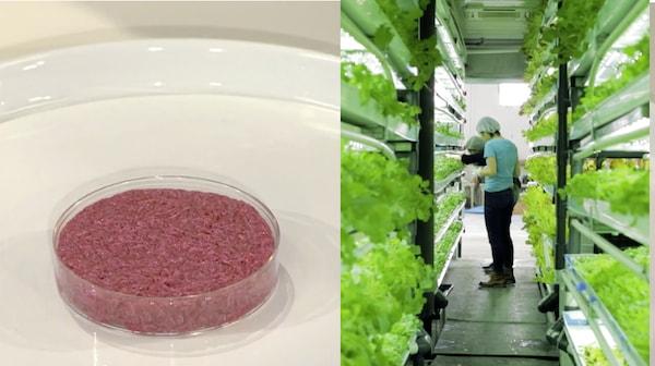 10年後の新しい仕事、培養肉と移動型農場 〜農業と食編〜